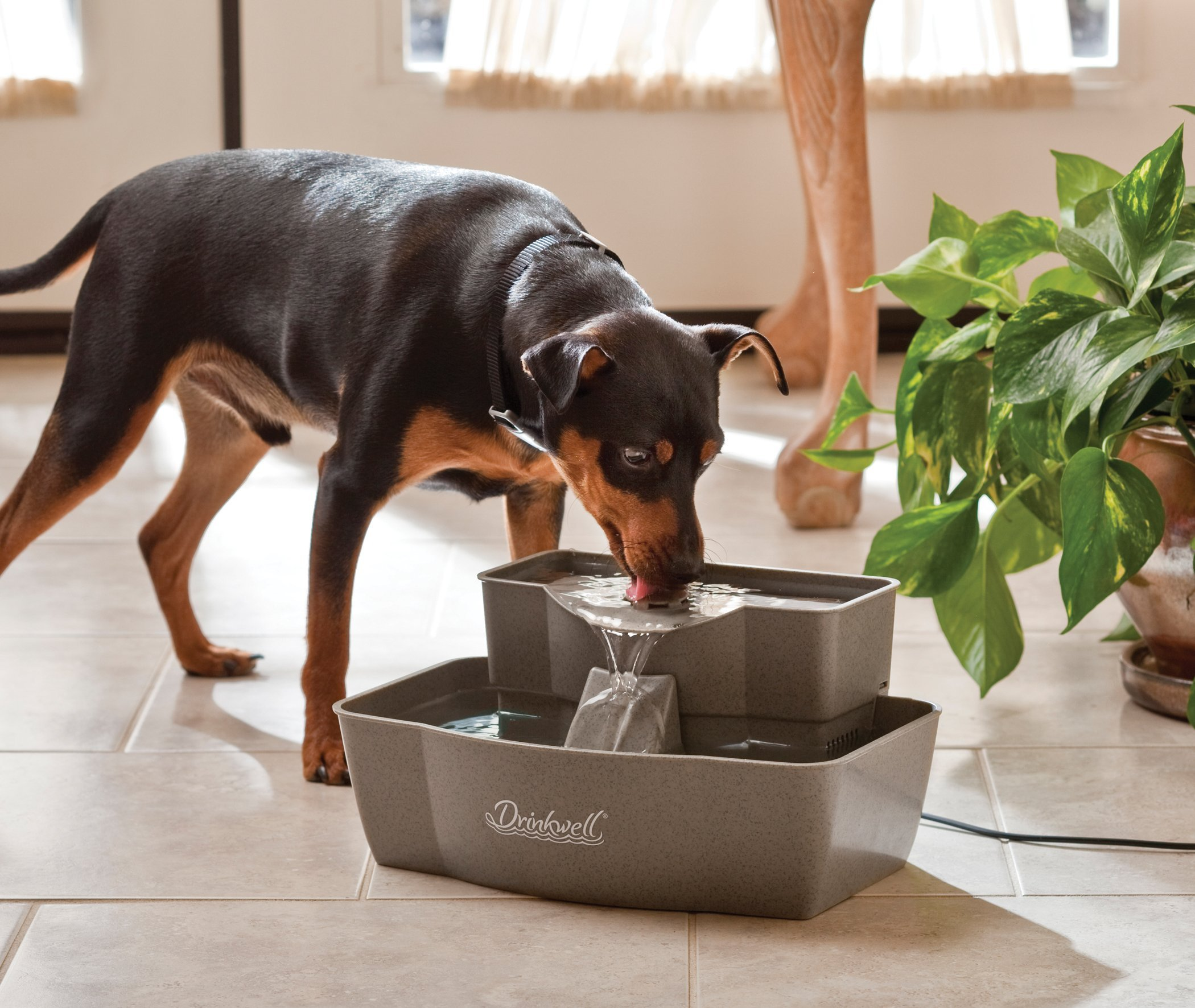Petsafe Drinkwell  Dog And Cat Water Fountain  Oz