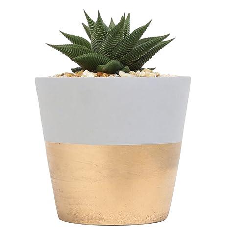 c4745572b3a4 Costa Farms, Premium Live Indoor Succulent Plant, Haworthia, Shelf Plant,  Two-