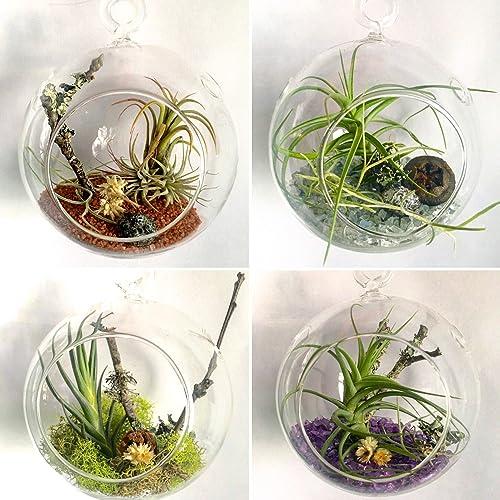 Amazon Com Hanging Glass Globe Air Plant Terrarium Handmade