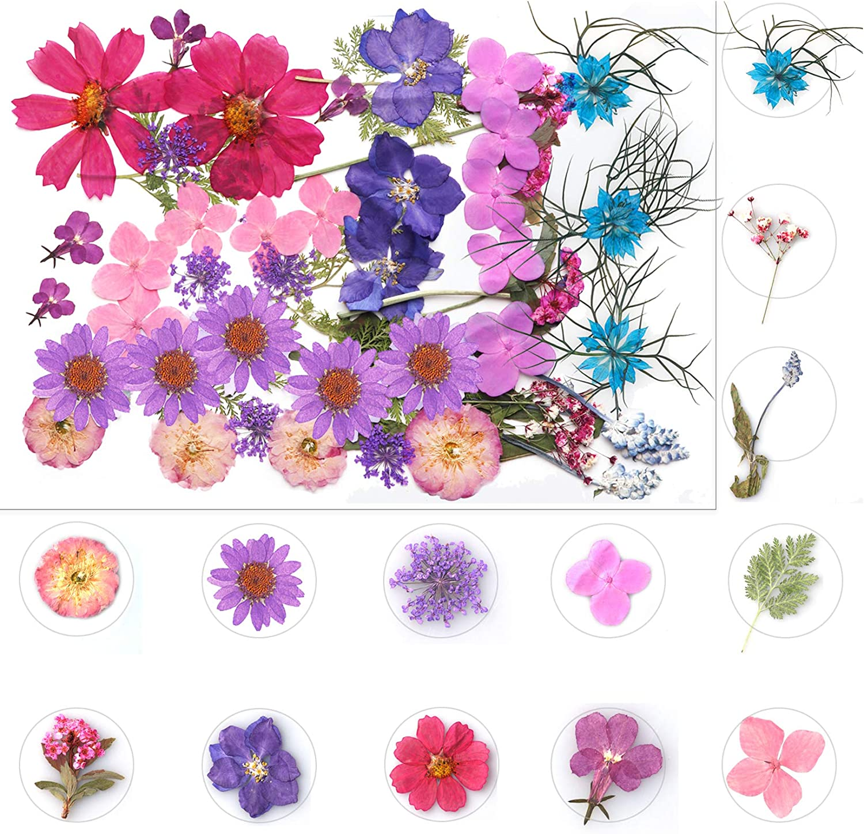 4-7cm Mini pine tree Dried Flowers Pressed plants diy Pressed   flower frame phone case 6pcs 10229350