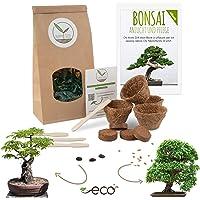 Bonsai Kit incl. eBook GRATUITO - Set con macetas de coco, semillas y tierra - idea de regalo sostenible para los…