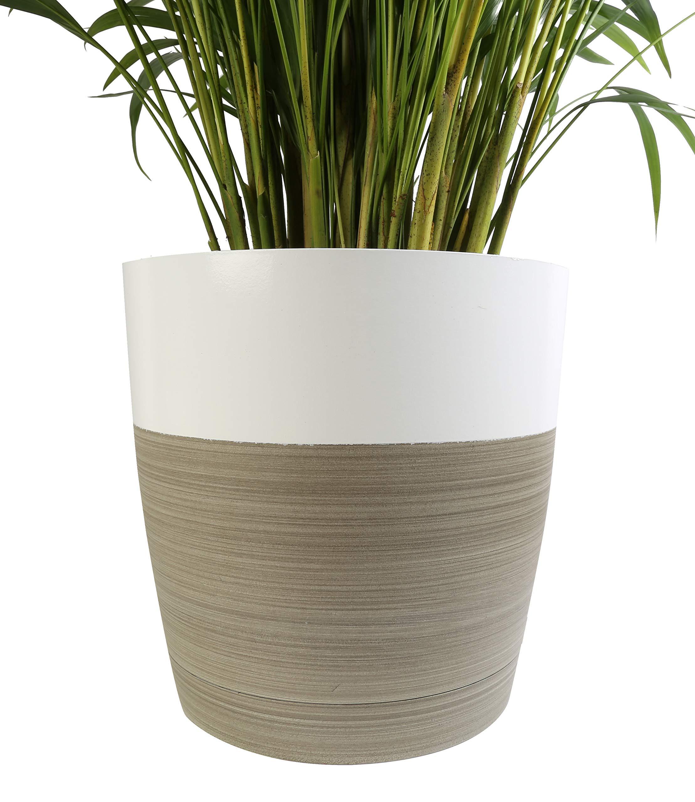 Costa Farms Live Areca Palm in Decor Planter, 3-Foot, White-Natural by Costa Farms (Image #2)