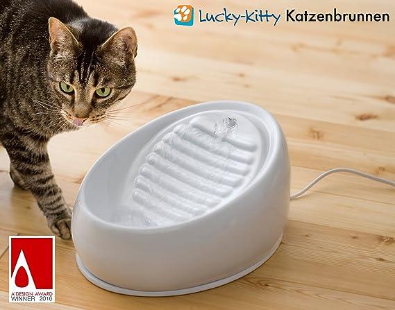 Lucky-Kitty Fuente de agua de cerámica para gato: Amazon.es: Productos para mascotas