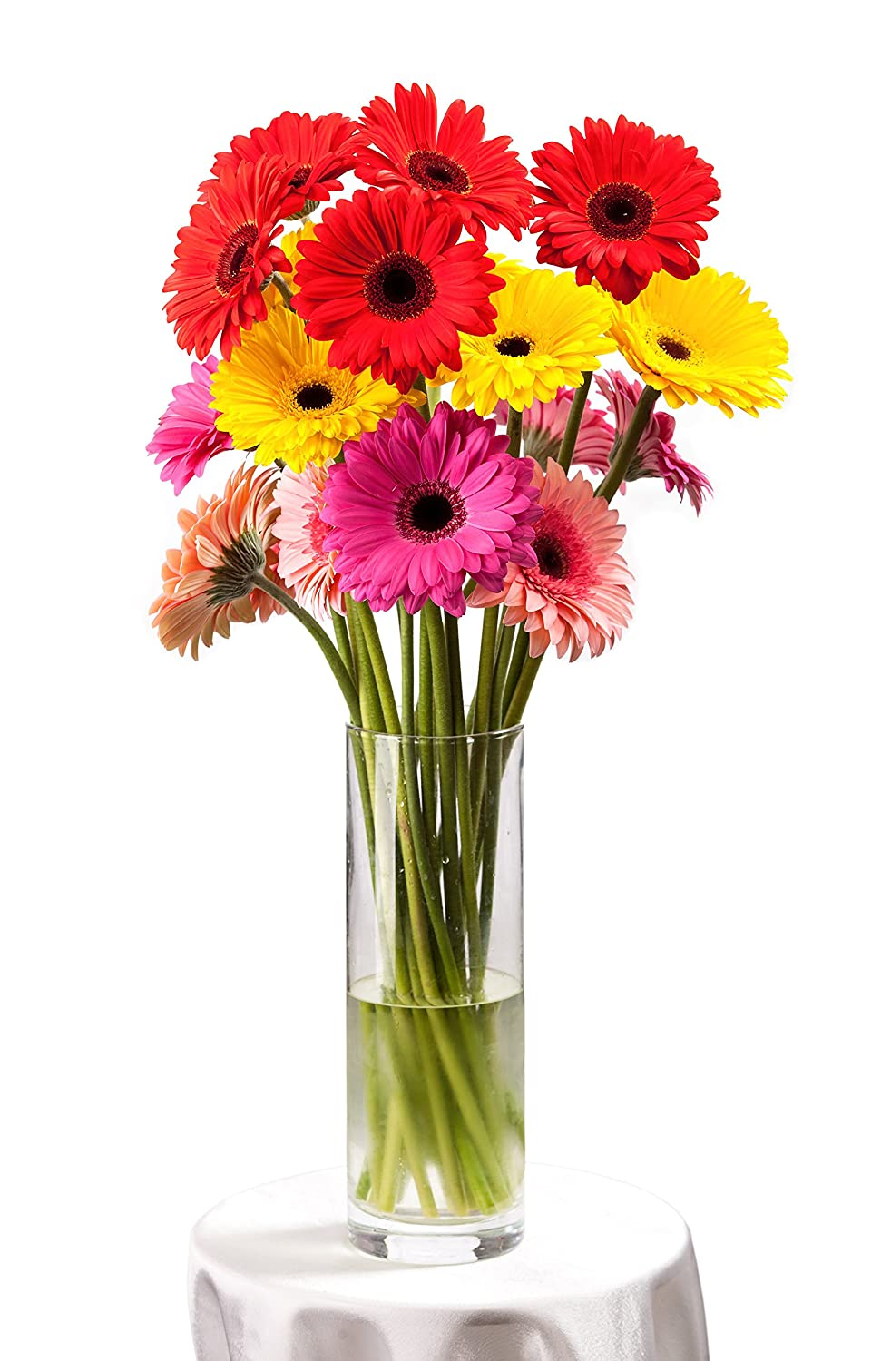 Amazon bloomsybox flowers for delivery gerbera daisies ranbow amazon bloomsybox flowers for delivery gerbera daisies ranbow hand tied bouquet no vase 20 stems everything else izmirmasajfo