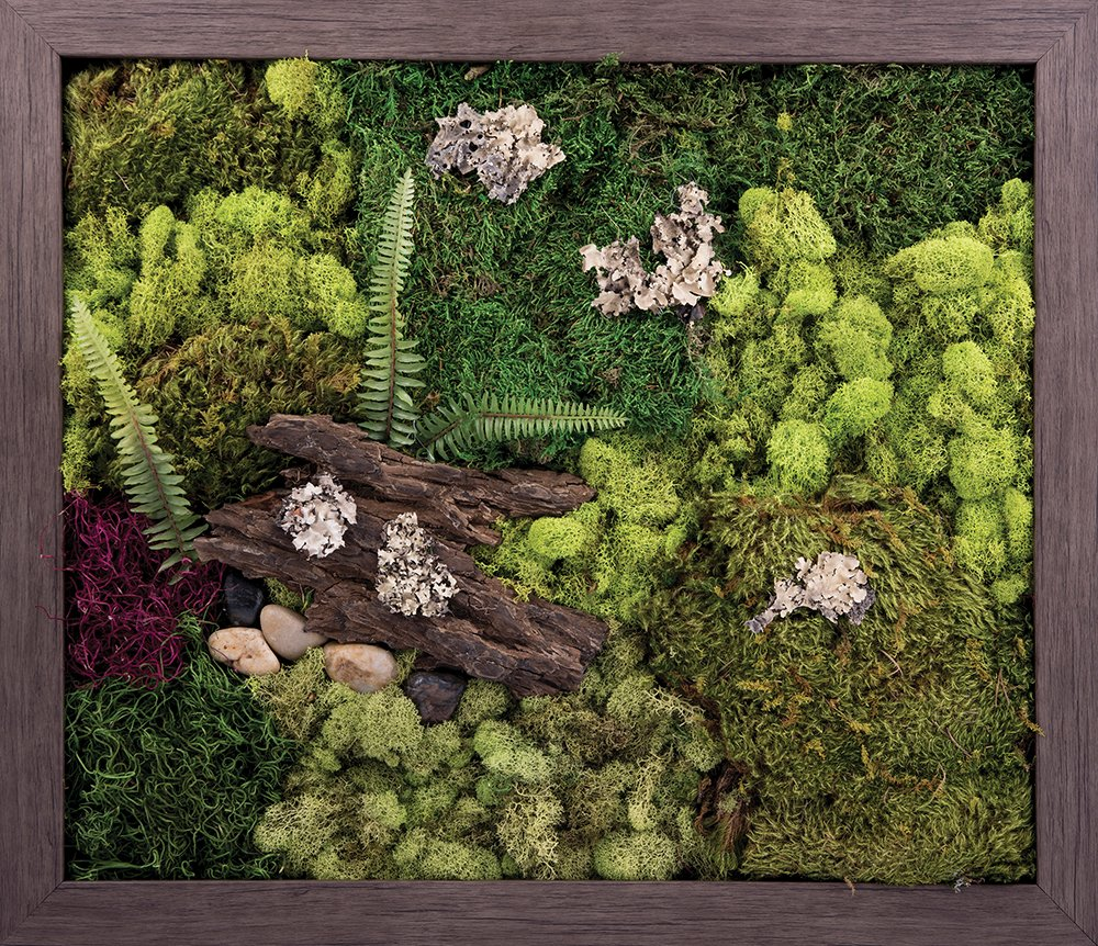 Carpentree 27''x23'' Wild Woods-Biophilic Framed Art by Carpentree