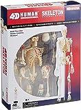 青島文化教材社 スカイネット 立体パズル 4D VISION 人体解剖 No.08 全身骨格解剖モデル