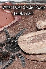 What Does Spider Poop Look Like? Paperback