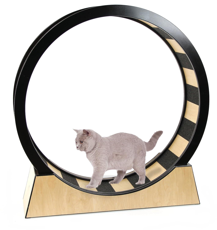 SwissPet Gato Rueda - Juguete & Entrenamiento para Gatos: Amazon.es: Productos para mascotas