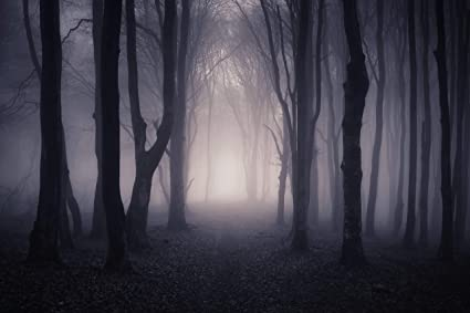 Amazon Com Halloween Scared Forest Backdrop Scary Night Fog