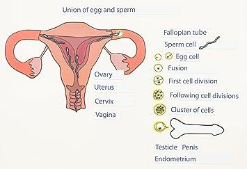 Biologie sexualkunde film