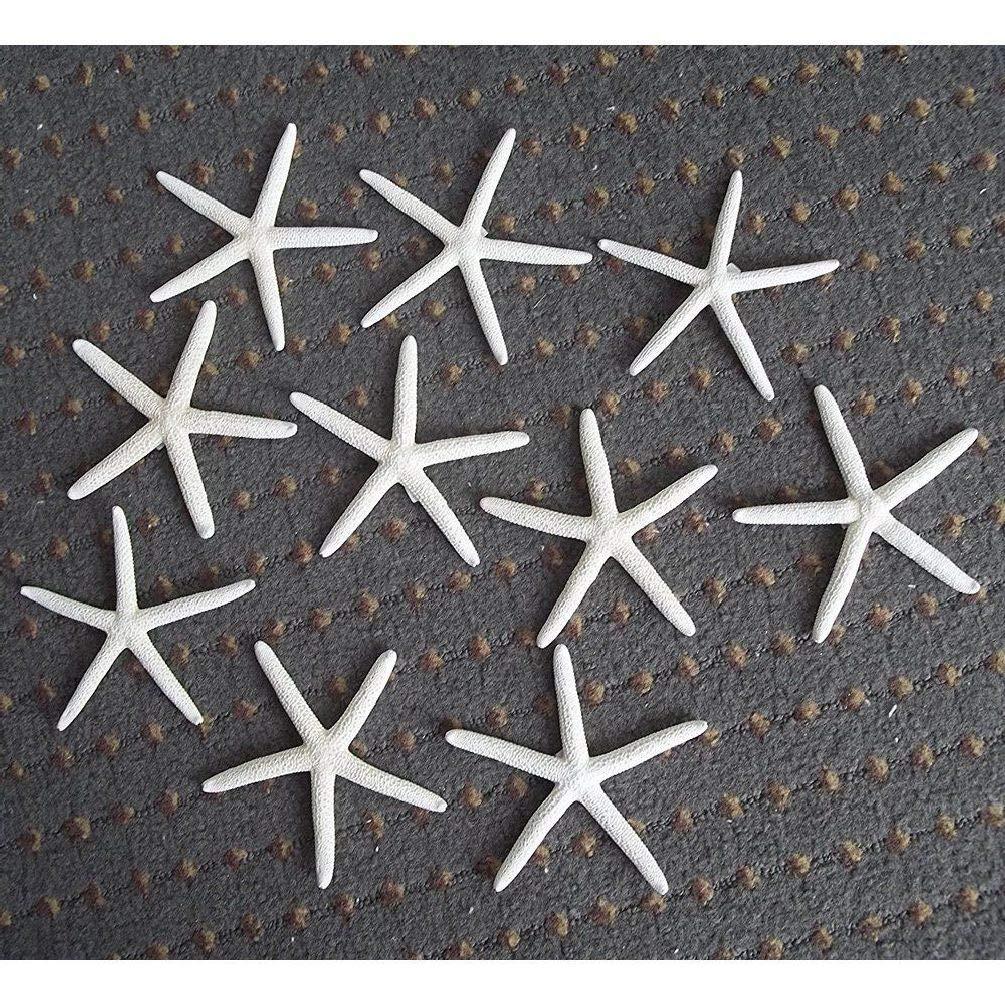 5Pcs 4-5'' White Finger Starfish Star Beach Sea Coastal Shell Wedding Home Decor