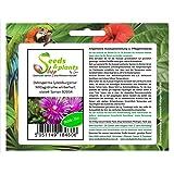 3x Nelumbo nucifera white Samen Lotusblume Wasserpflanze B1811