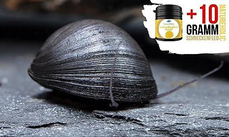 garnelio – Antracita de comida Caracol/acero Casco Caracol – Antialgas nº 1 – 6