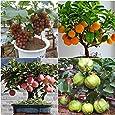 NooElec Seeds India Dwar Fruit Seeds Combo of Apple, Grapes, Guava, Orange -5 Seeds Each