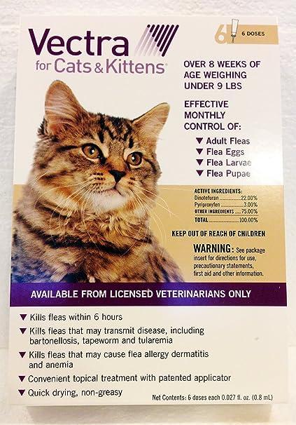 Amazon.com: Summit vetpharm Vectra para gatos, 6 mes ...