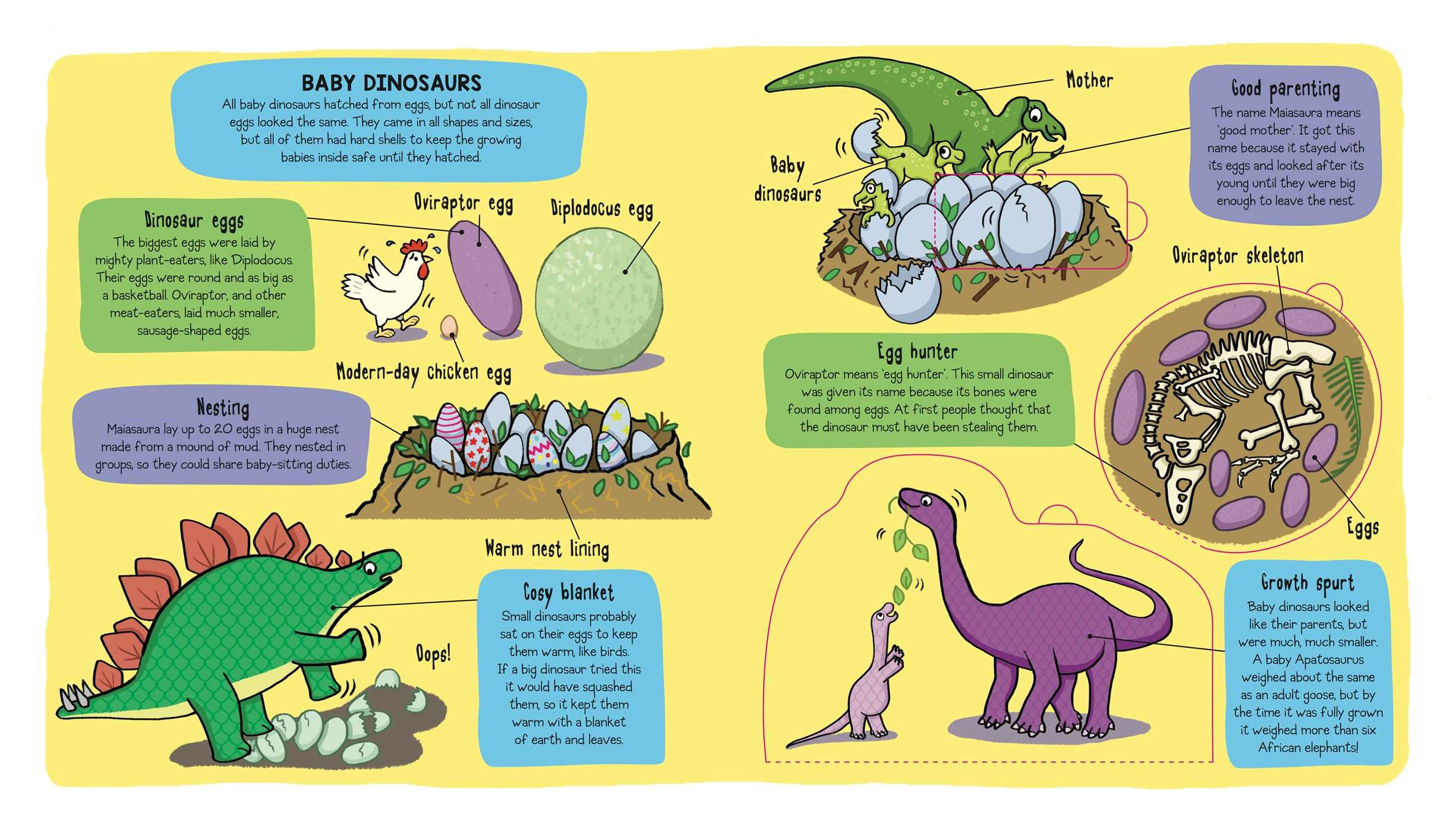 Little Explorers Dinosaurs Bee Books 9781499804904 Amazon