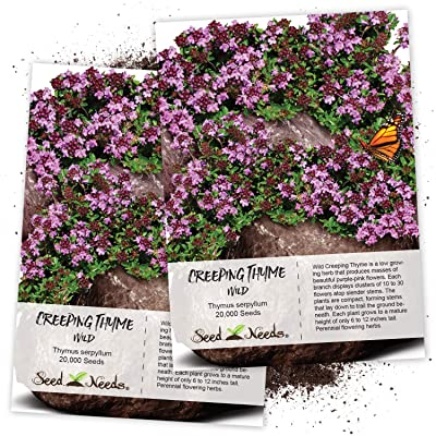 Seed Needs, Wild Creeping Thyme (Thymus serpyllum) Twin Pack of 20, 000 Seeds Each : Plant Seed And Flower Products : Garden & Outdoor