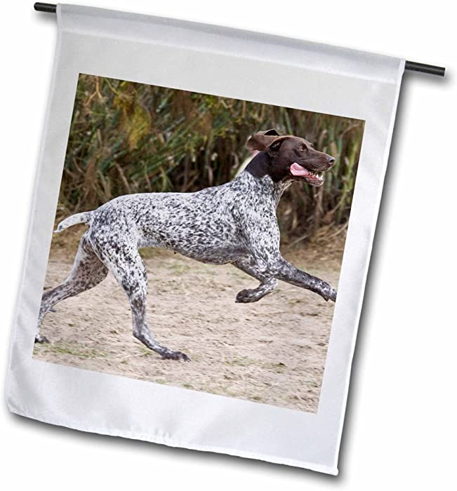 """3dRose A German Shorthaired Pointer Dog Jumping - Zandria Muench Beraldo - Garden Flag, 12 by 18"""""""