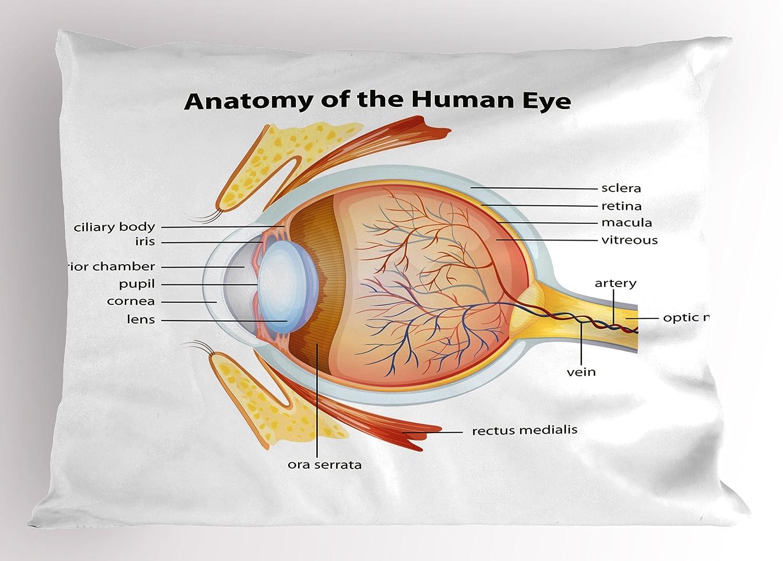 Amazon Ambesonne Educational Pillow Sham Human Eye Anatomy
