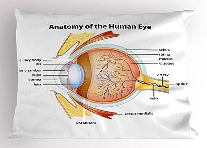 Amazon.com: Ambesonne Educational Pillow Sham, Human Eye Anatomy ...