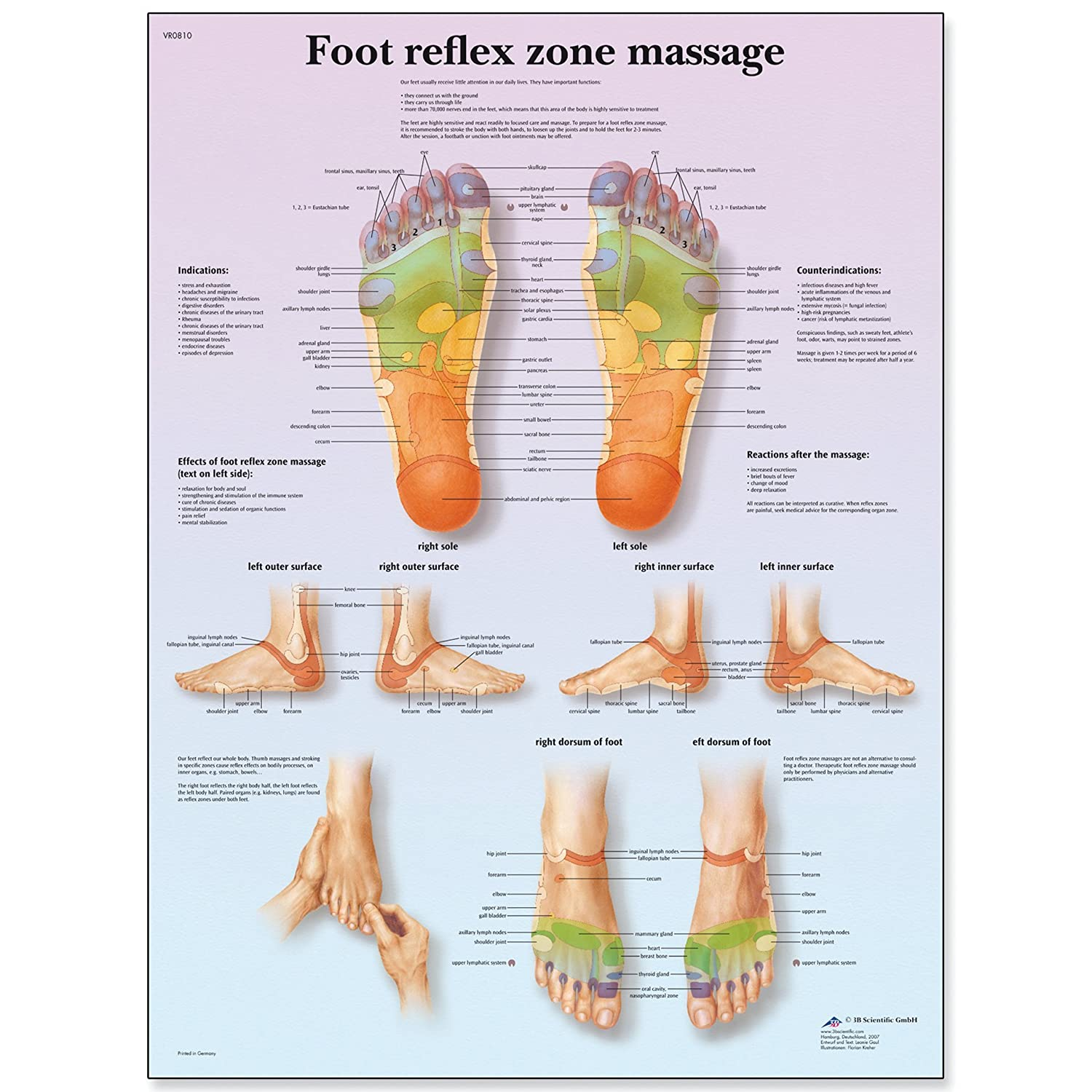 3B Scientific VR1810L Glossy UV Resistant Laminated Paper Foot Reflex Zone Massage Anatomical Chart, Poster Size 20-Inch Widthx26-Inch Height