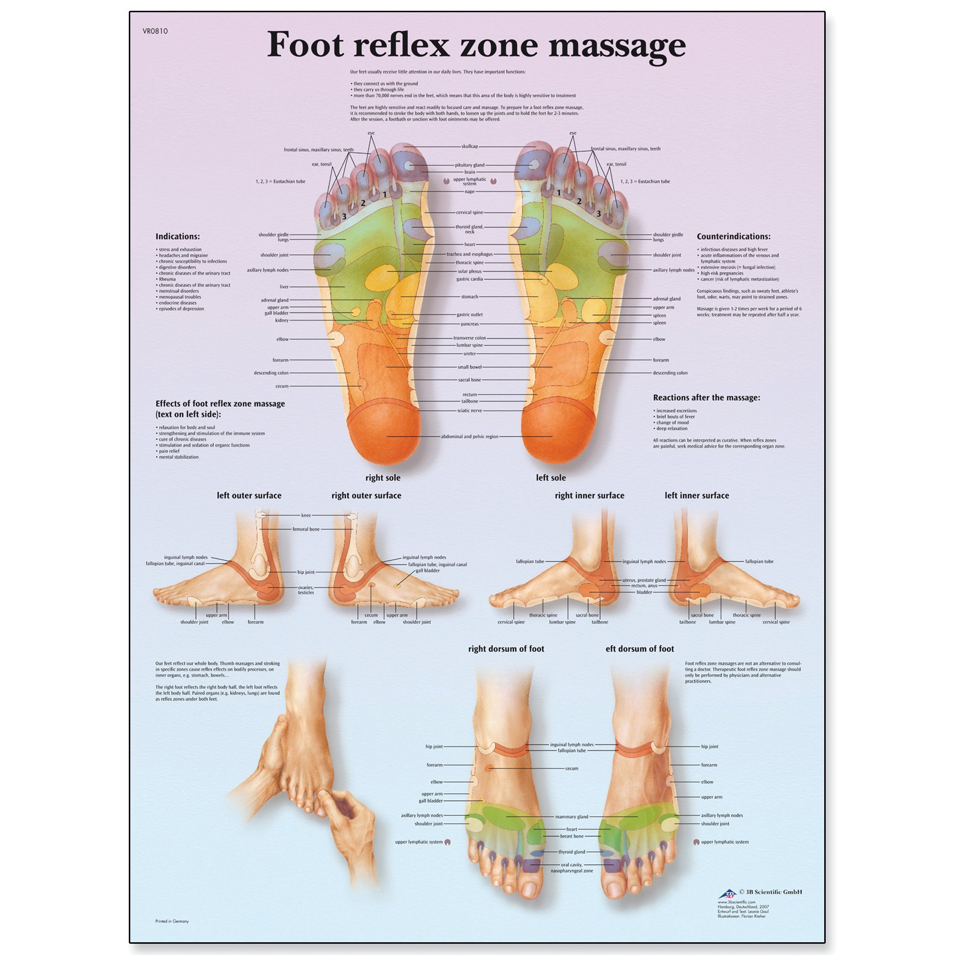 Amazon Poster Sketch Chart Of The Foot Reflexive Zones By