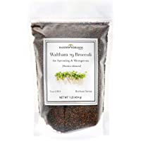 Broccoli Sprouting Seeds for Broccoli Sprouts & Microgreens | Waltham 29 Variety | Non GMO Heirloom Seeds | 1 LB Resealable Bag | Perfect for Sprouting Jar & Seed Tray | Rainbow Heirloom Seed Co.