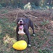 Pet Supplies : Pet Toy Balls : Jolly Pets 12-Inch, Jolly