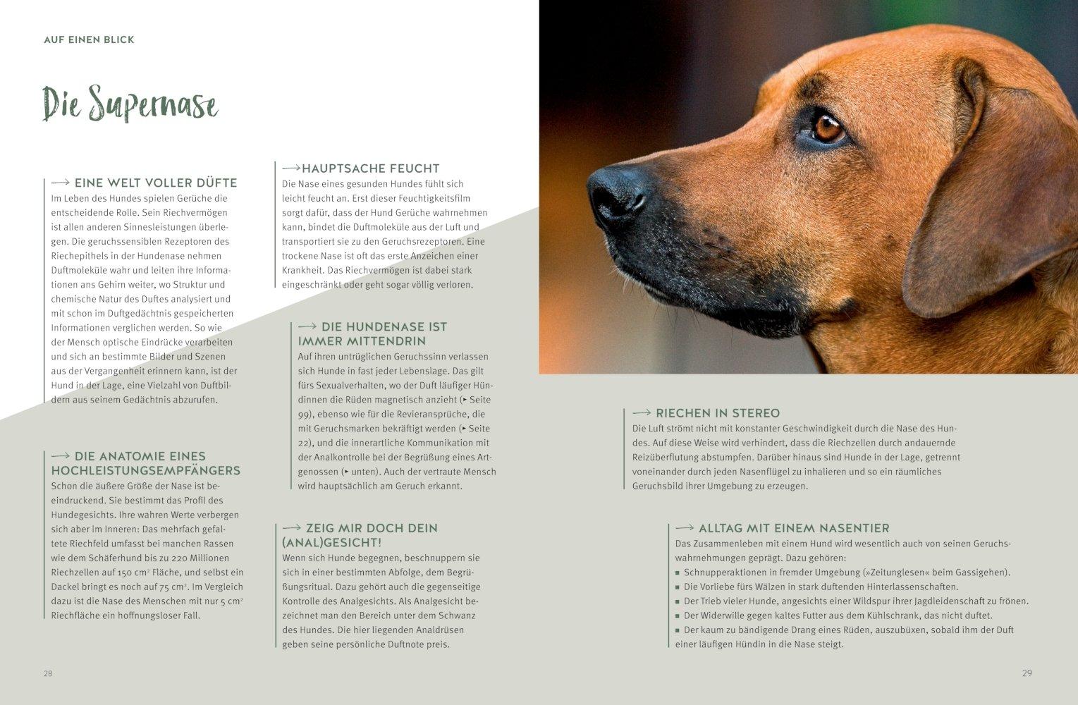 Hunde verstehen lernen: Der Mensch-Hund-Beziehungsratgeber GU Tier ...