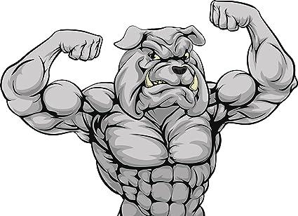 Bulldog muscular. Amazon com buff muscle