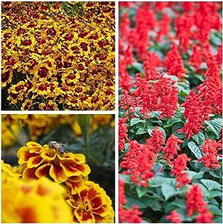 PLAT FIRM Germinazione dei semi: Palermo - semi di specie di piante da fiore 3