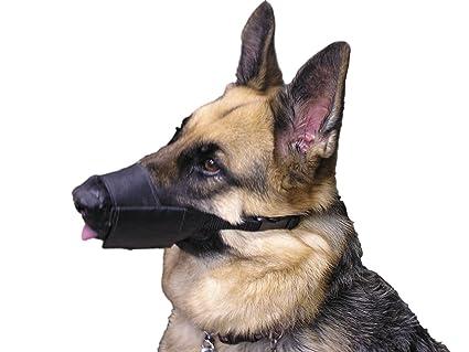 dog muzzle with teeth