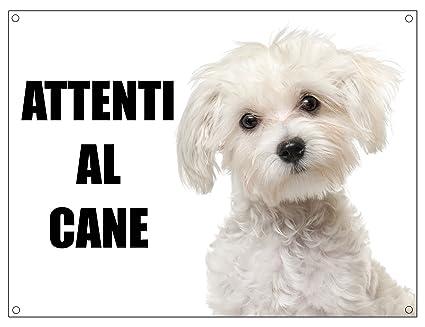 Maltese Attenti Al Cane Mod 1 Targa Cartello In Metallo 15x20