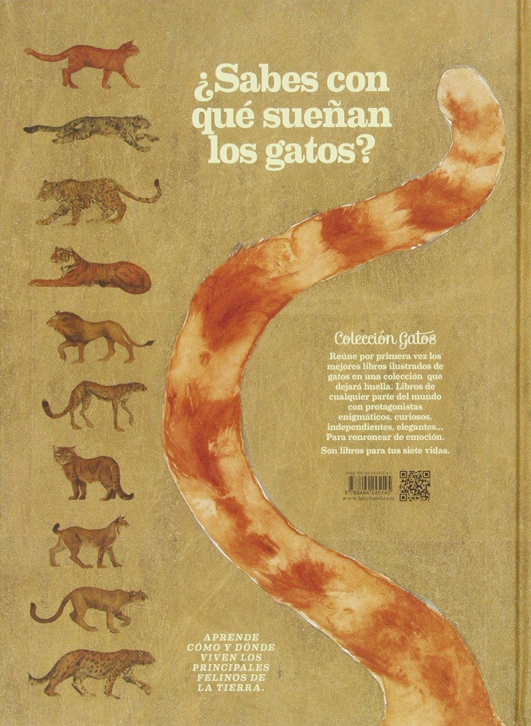 Yo soy Gato (Spanish Edition): Jackie Morris, Lata de Sal: 9788494245145: Amazon.com: Books