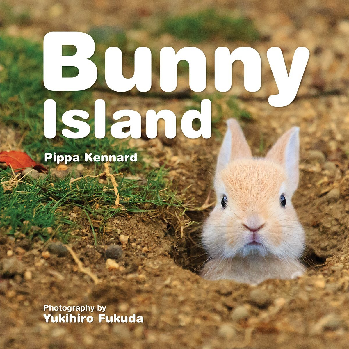 Download Bunny Island pdf