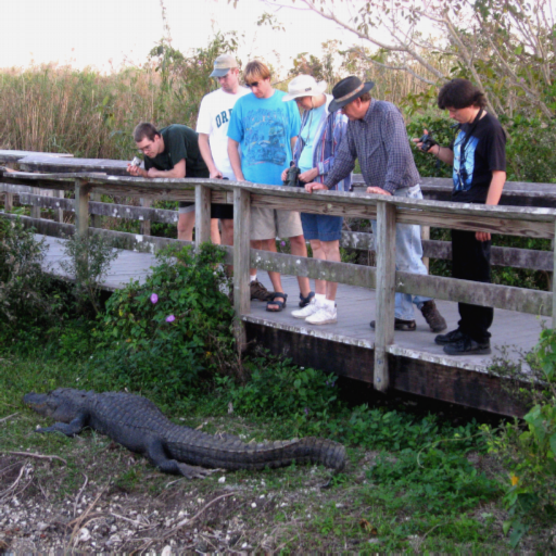 Alligator Watchers Live WP