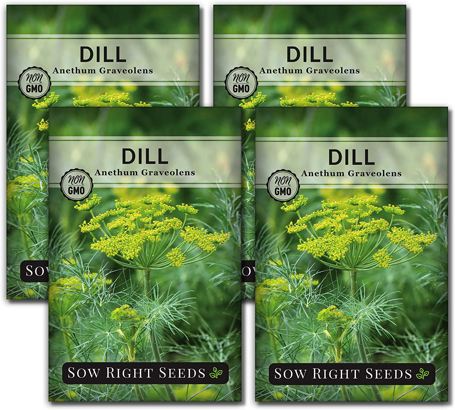 Sow Right Seeds - Dill Seed for Planting - All Non-GMO Heirloom Dill Seeds with Full Instructions for Easy Planting and Growing Your Kitchen Herb Garden, Indoor or Outdoor; Great Gift (4 Packets)