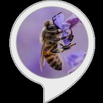 Bienen Fakten
