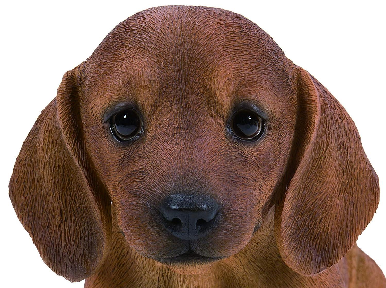 pp-dchb-f /Pet Pals Brown Dachshund Puppy casa o Giardino Decorazione Vivid Arts/
