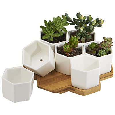FLOWERPLUS Planter Pots Indoor, 7 Pack 2.75 Inch Modern White Ceramic Small Hex Succulent Cactus Flower Plant Pot with Bamboo Tray for Indoors Outdoor Office Home Garden Kitchen Decor (Hexagon): Garden & Outdoor