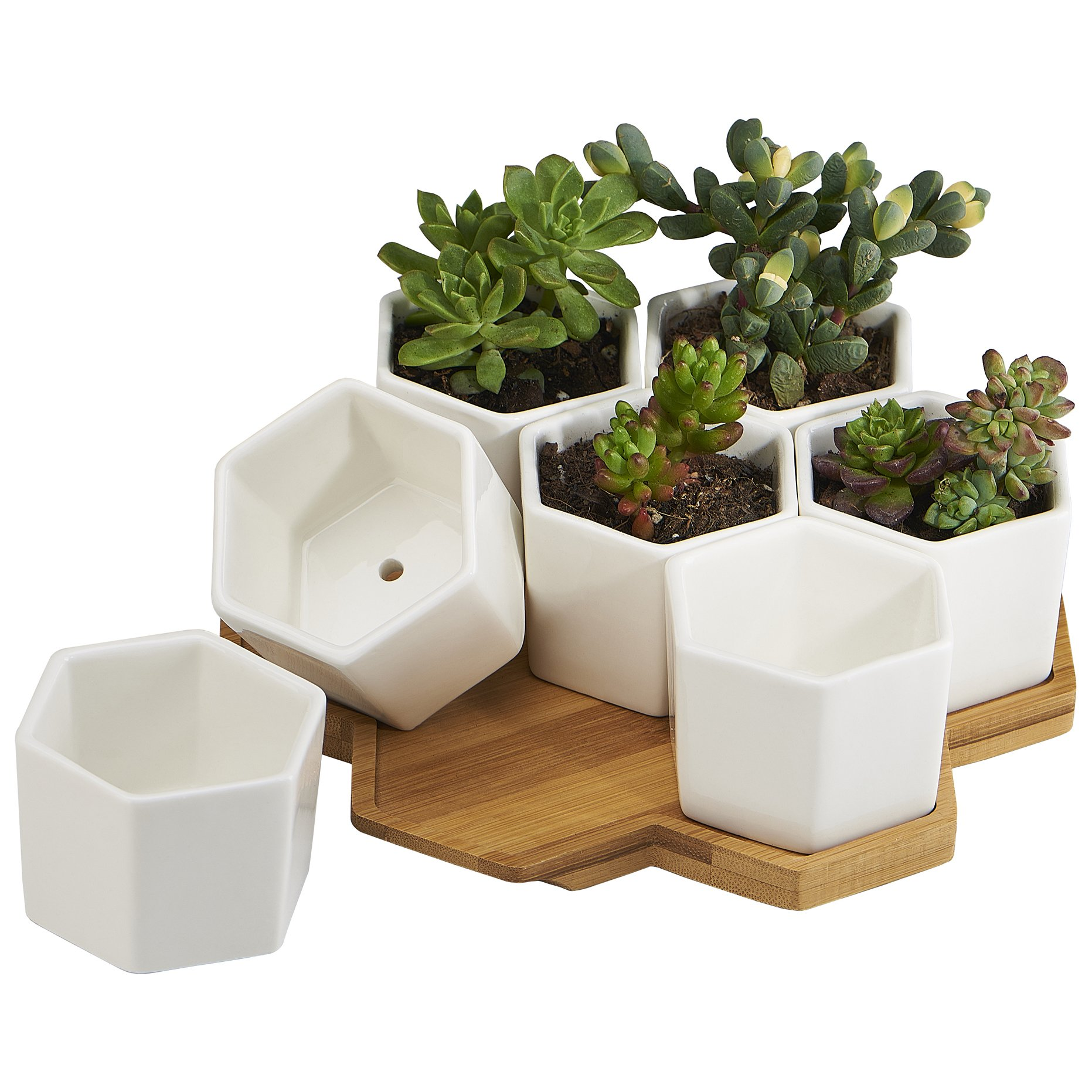 flowerplus Planter Pots Indoor, 7 Pack 2.75 Inch Modern White Ceramic Small Hex Succulent Cactus Flower Plant Pot with Bamboo Tray for Indoors Outdoor Office Home Garden Kitchen Decor (Hexagon) by flowerplus