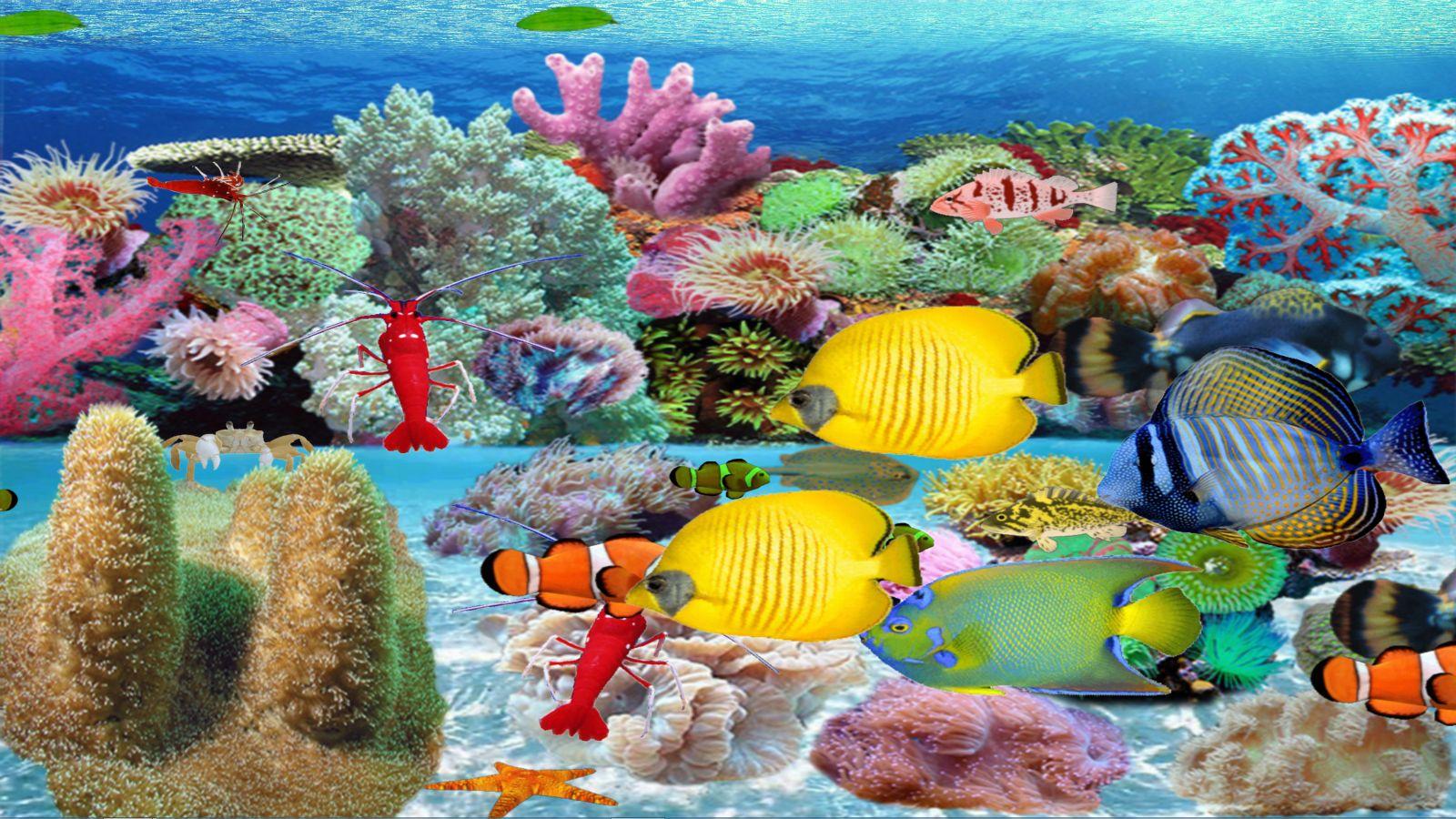 Soft Coral Sea [Download] ()