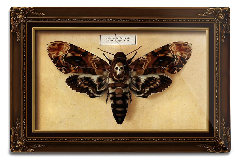 Death 's Head Moth 12 x 18 Metal Sign LANT-42907-12x18M B06Y128YGJ  12 x 18 Metal Sign