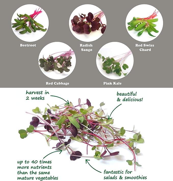 PURPLICIOUS Kit de Cultivo de MICROGREENS para Cultivar tus ...