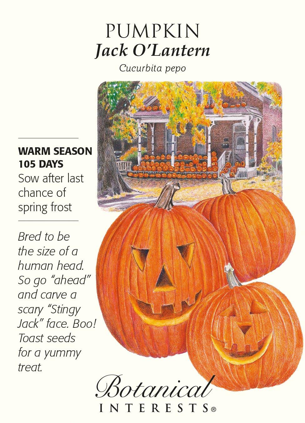 Jack O'Lantern Pumpkin Seeds - 6.5 grams by Hirts: Seed; Pumpkin (Image #1)