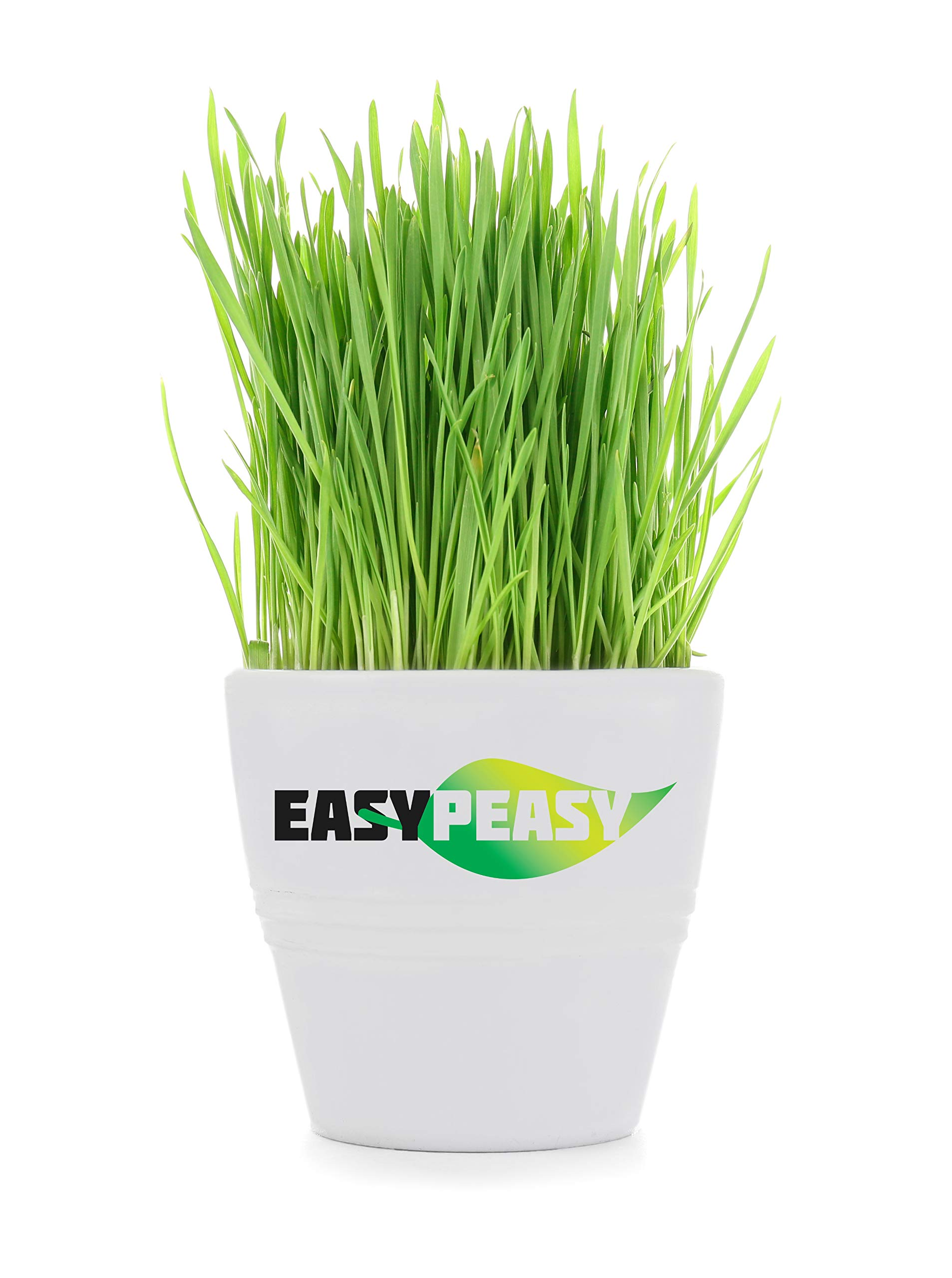 Wheatgrass Seeds, Five Pound, Cat Grass Seeds, Non-GMO, Organic, 5LB