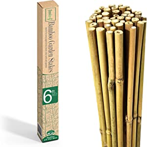JINOKO Bamboo Stakes - Pack of 25 Premium 6 FT Garden Stakes for Plants - Natural Gardening Supports for Tomato, Cucumber, Peas, Beans & Trees - Indoor Outdoor Climbing Plant Support - Long Sticks