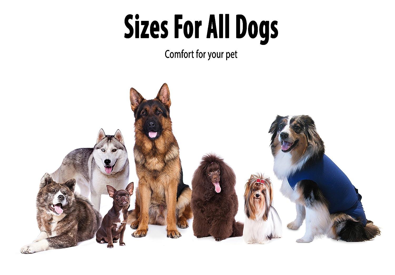 Surgi Snuggly e cuello alternativa, creado por un veterinario específicamente para adaptarse a su perro, pequeño: Amazon.es: Productos para mascotas