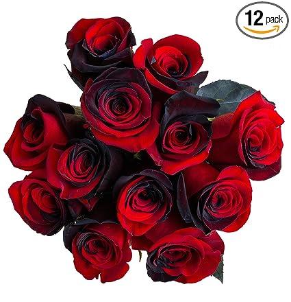 Keeps Roses Fresh Rose Flower Food Pack of Three