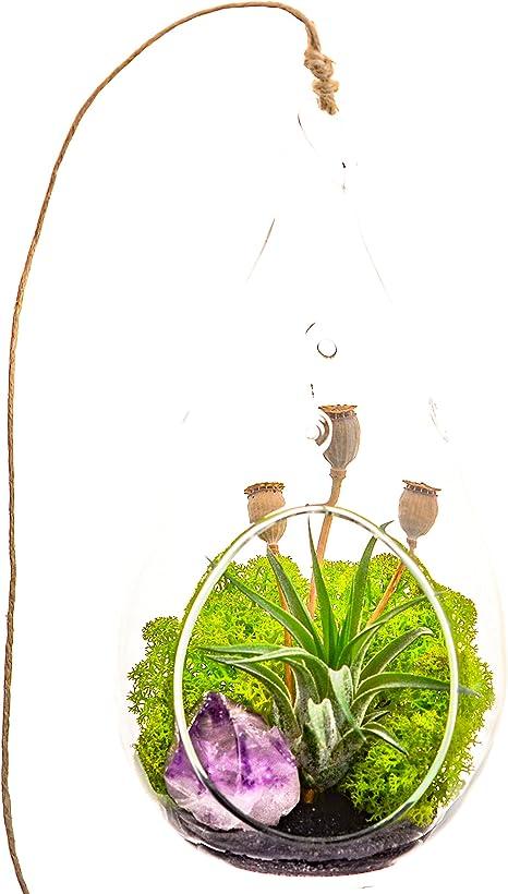 Mini Air Plant Terrarium with Purple Amethyst Crystal  Shabby Chic  3 Round or 5 Teardrop